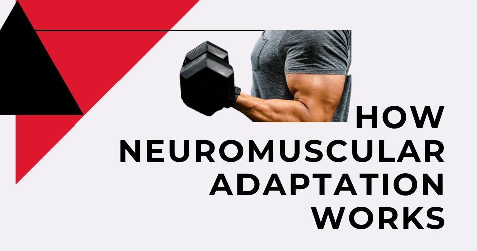 neuromuscular adaptation
