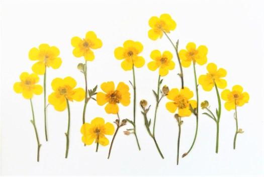 pressede blomster
