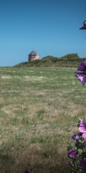 Urlaubsfoto Winkel Blume nah