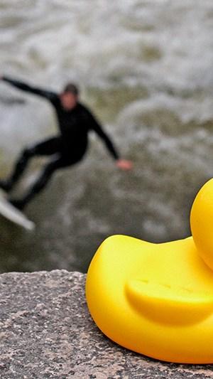 Urlaubsfoto Ente Detail