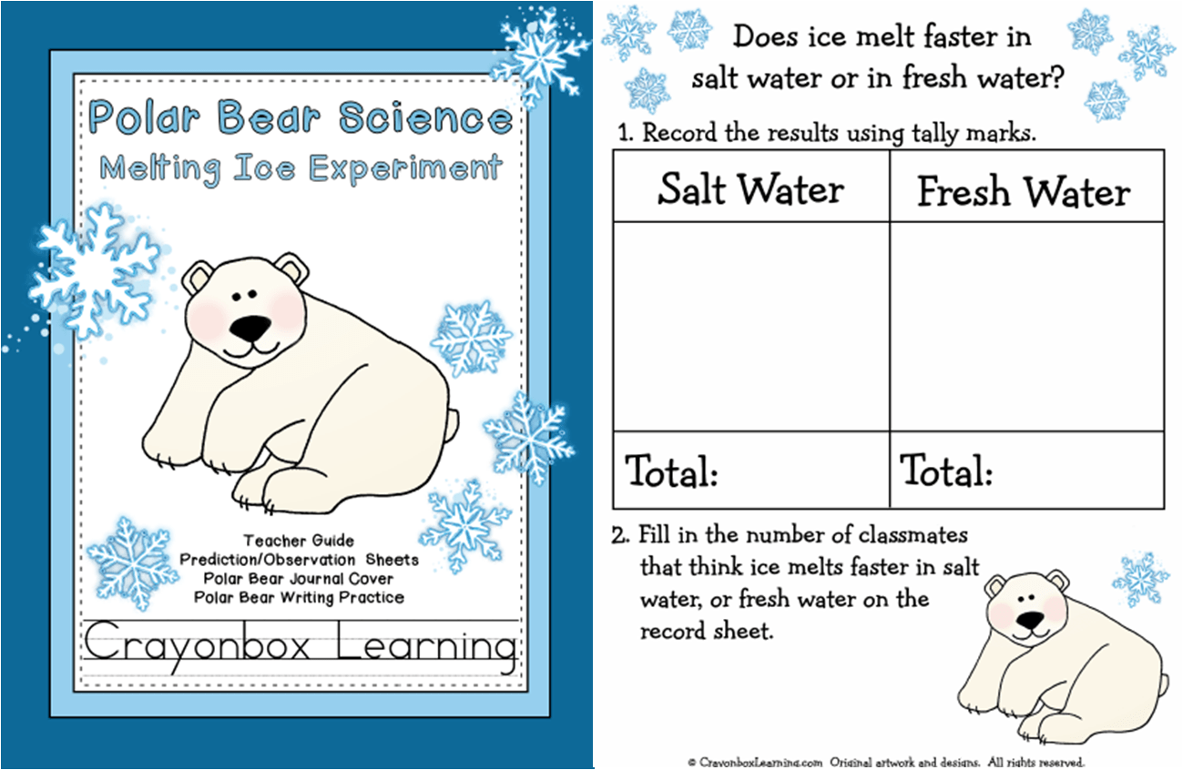 Polar Bear Food Chain Worksheet