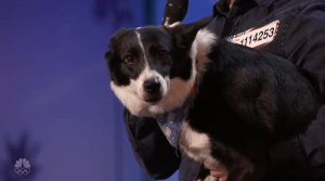 Ginger the dog steals hearts at America's Got Talent 2016 auditions