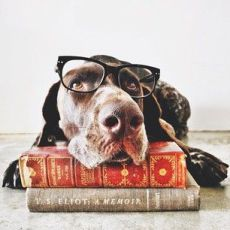 Dog Idioms from English – Video