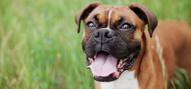 They 20 Most Popular Dogs Names of 2017
