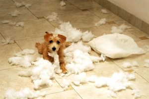 How To Stop A Pup Chewing Your Home To Pieces