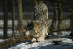 Animals, all seasons in a natural habitat.