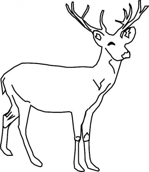 deer coloring pic
