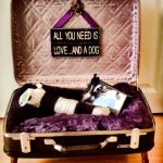 Repurposed Suitcases make a great dog bed