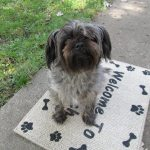 Cheap Stenciled Welcome Mat