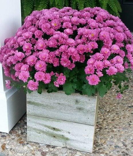 rustic-planter-koozie