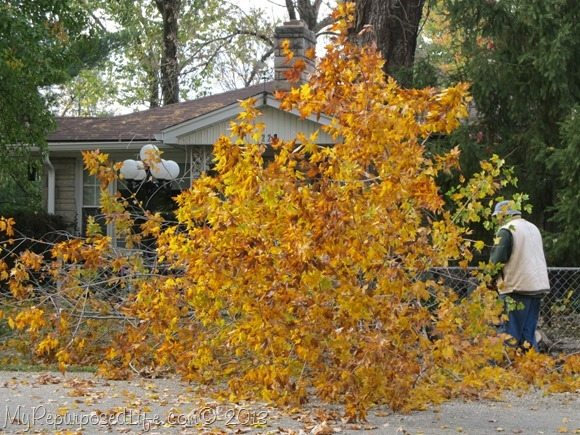 large-water-maple
