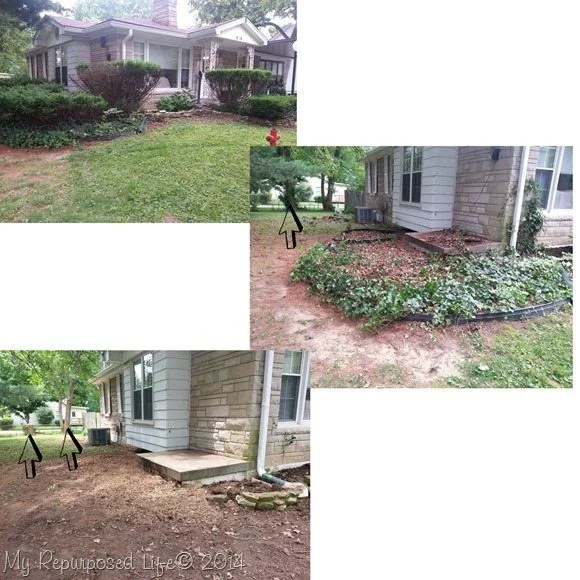 before-after-bushes-tree-removal