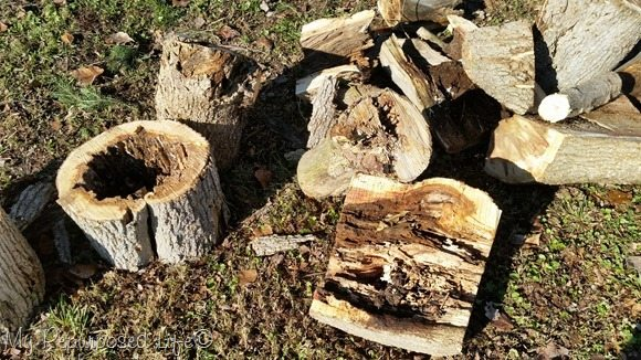 rotten tree trunk pieces