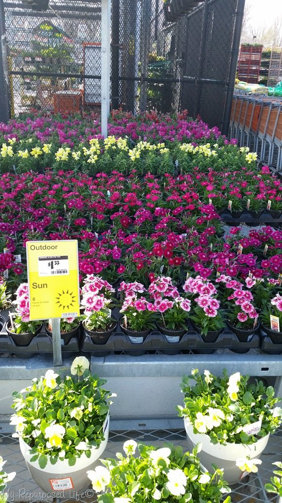 shopping Home Depot for flowers