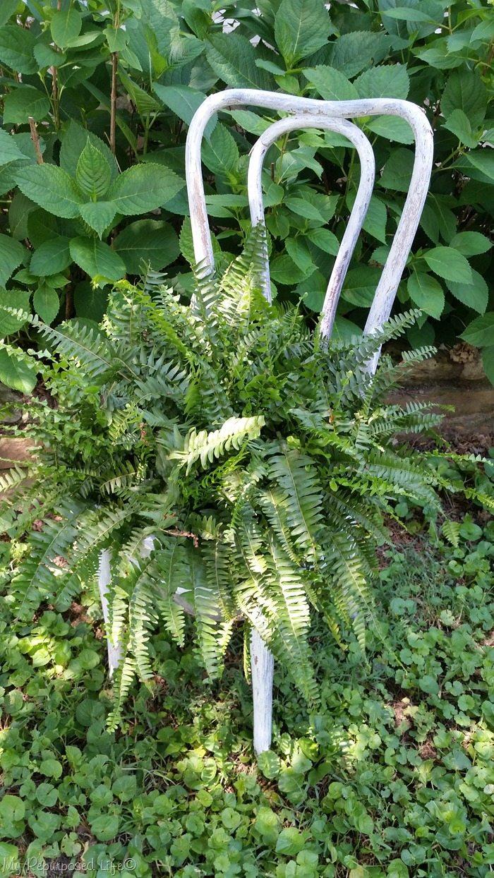 chair planter with boston fern