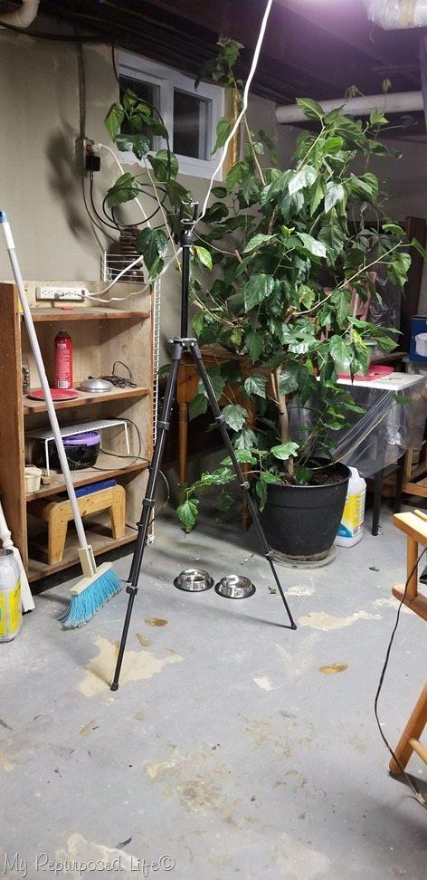 messy corner basement shop after