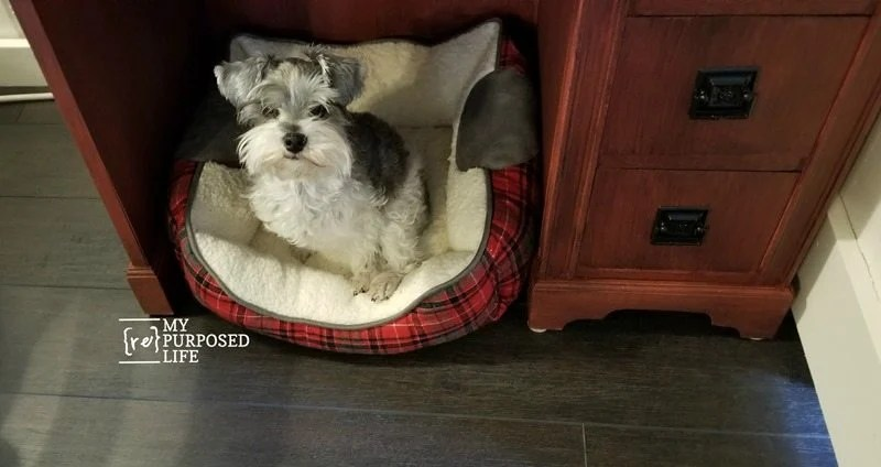 dog bed knee hole desk as kitchen storage