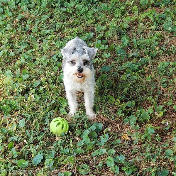 lulu mae wanting to play ball