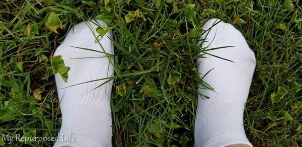 wear white socks to detect fleas