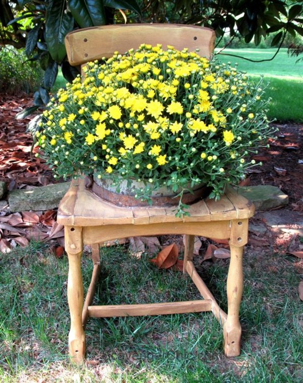 chair planter with yellow mum