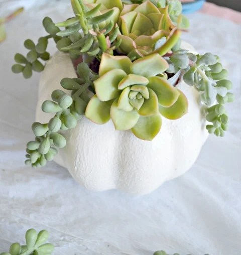 dollar store pumpkin to succulent planter