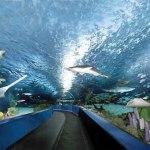 Discount at Ripley's Aquarium Myrtle Beach