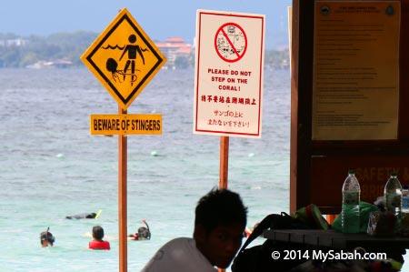 jellyfish warning