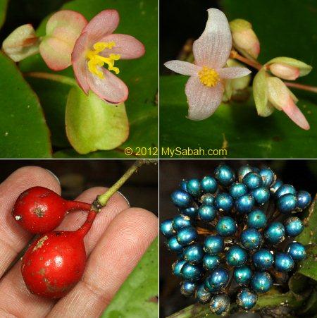 flowers of Kiansom