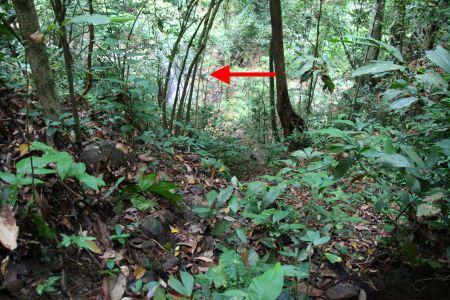 trail to Kiansom Waterall