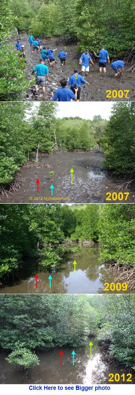 mangrove planting by DID