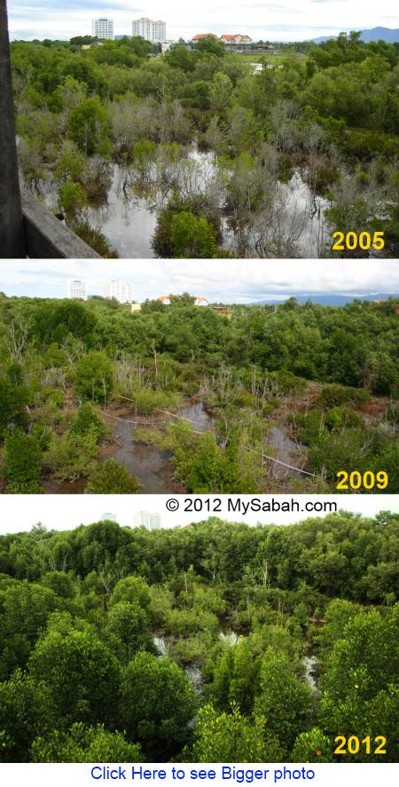 mangrove marsh of KK Wetlands