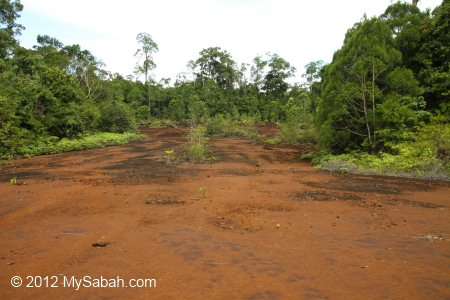 road in Tawai Forest Reserve
