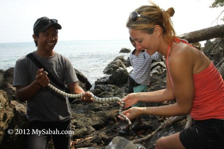 tourist holding a yellow-lipped sea krait