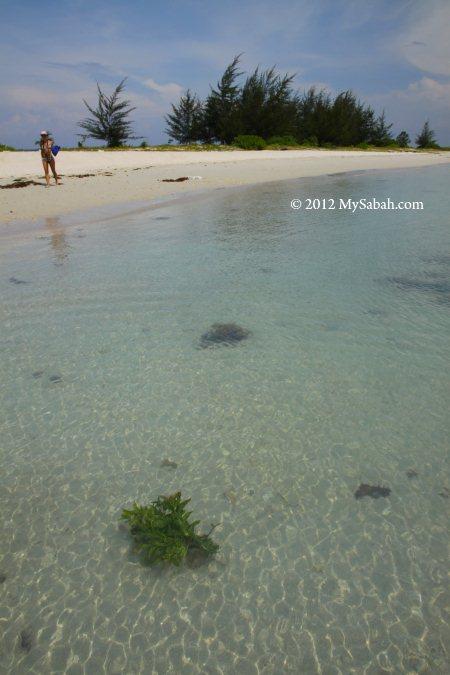Sands Spit Island of Pulau Tiga Park