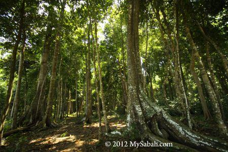 forest of Survivor Island