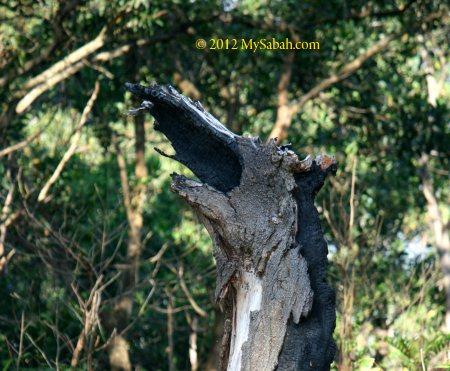 dragon head tree