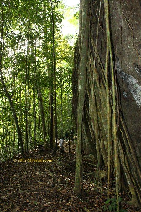 tree root