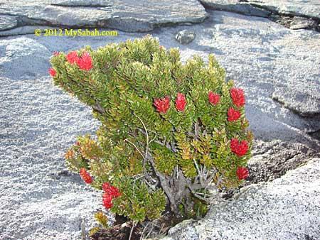 alpine vegetation