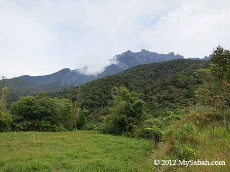 Mt. Kinabalu and forest