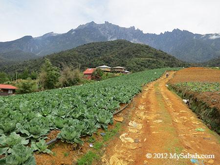 farmland in Kundasang