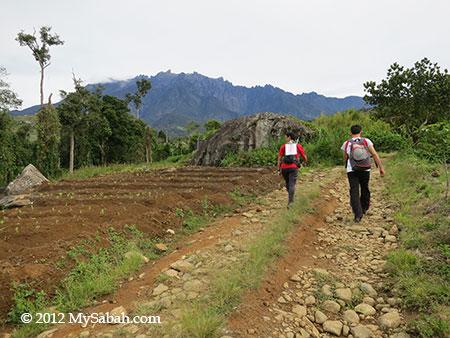 trail of TMBT Ultra Trail Run