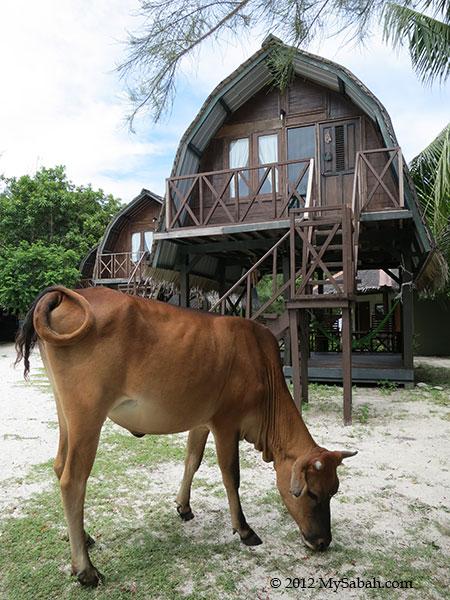 Mari-Mari Backpackers Lodge (Mantanani Island)