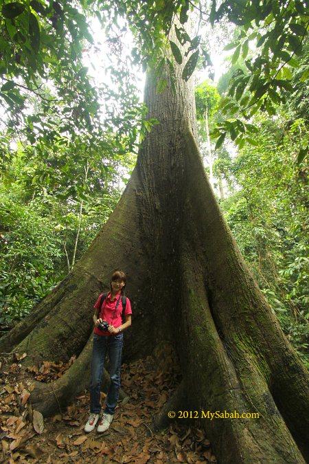 big tree at RDC