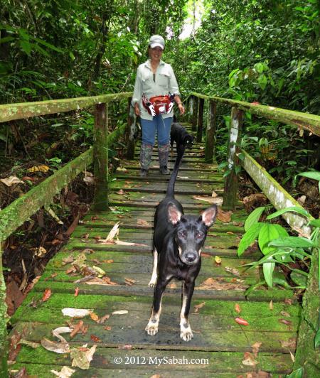 boardwalk to Simud Hitam cave