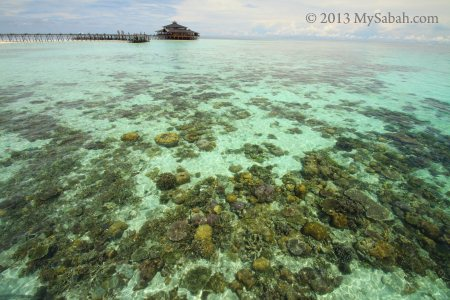 corals of Lankayan Island