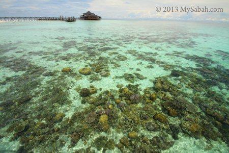 corals of Lankayan Island