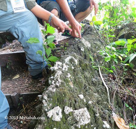 granite embedded in volcanic rock