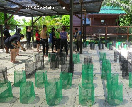 sea turtle conservation area