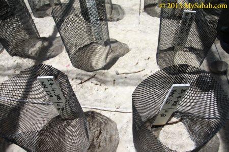 sea turtle nests