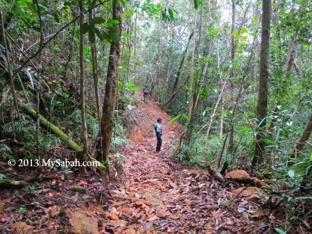 nature trail of Mt. Silam